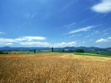 田舎002.jpg